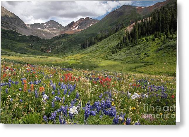 Ss Unites States Greeting Cards - Alpine Flowers In Rustlers Gulch, Usa Greeting Card by Bob Gibbons