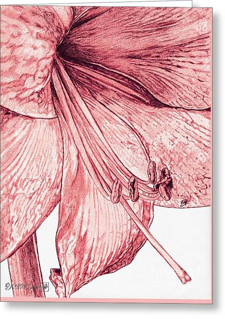 Indoor Drawings Greeting Cards - Amaryllis Greeting Card by J McCombie