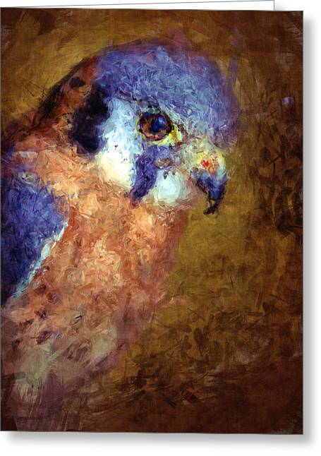 American Kestrel Falco Greeting Card by Robert Jensen