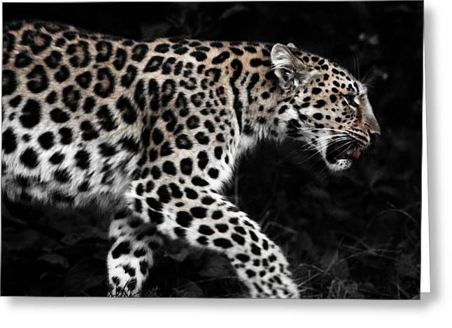 Fangs Greeting Cards - Amur Leopard Greeting Card by Martin Newman