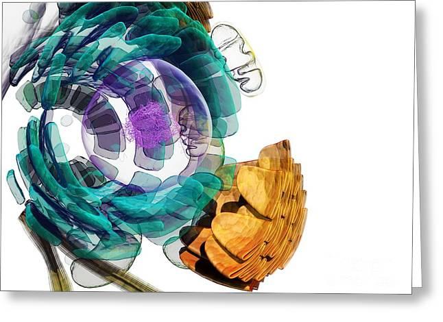 Animal Mitochondria Greeting Cards - Animal Cell, Artwork Greeting Card by Pasieka