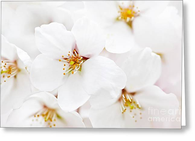 Apple Tree Greeting Cards - Apple blossoms Greeting Card by Elena Elisseeva