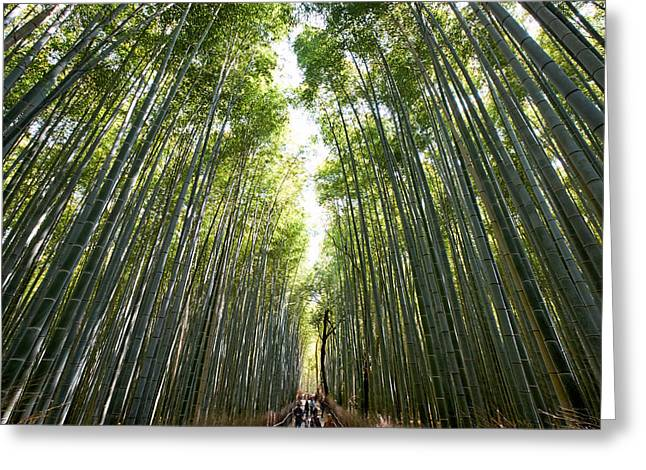 Bamboo Fence Greeting Cards - Arashiyama bamboo forest Kyoto Greeting Card by Marco Brivio