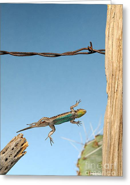 Arizona Fence Lizard Greeting Card by Scott Linstead