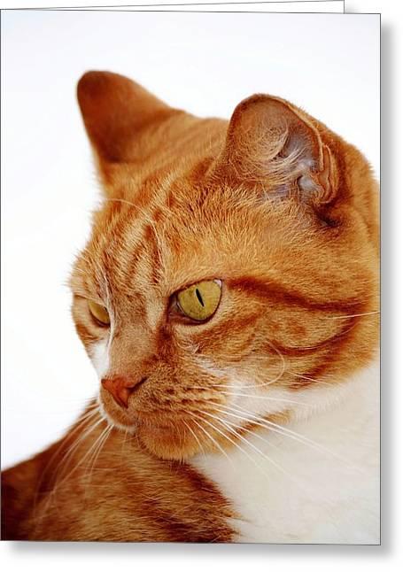 Arnie Greeting Cards - Arnie the Cat Greeting Card by Werner Lehmann