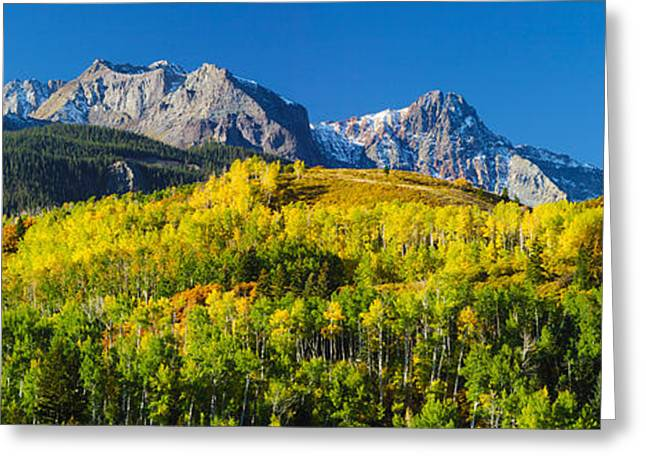 Aspen Trees With Mountains Greeting Card by Panoramic Images