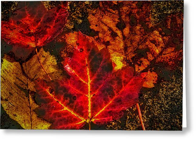 Reds Of Autumn Digital Greeting Cards - Autumn Leaves Greeting Card by David Patterson