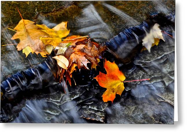 Visceral Greeting Cards - Autumn Leaves Greeting Card by Frozen in Time Fine Art Photography