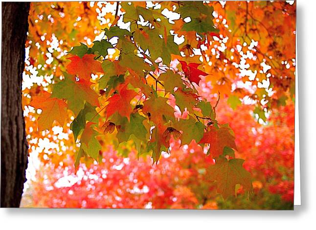 Leafs Greeting Cards - Autumn Leaves Greeting Card by Rona Black