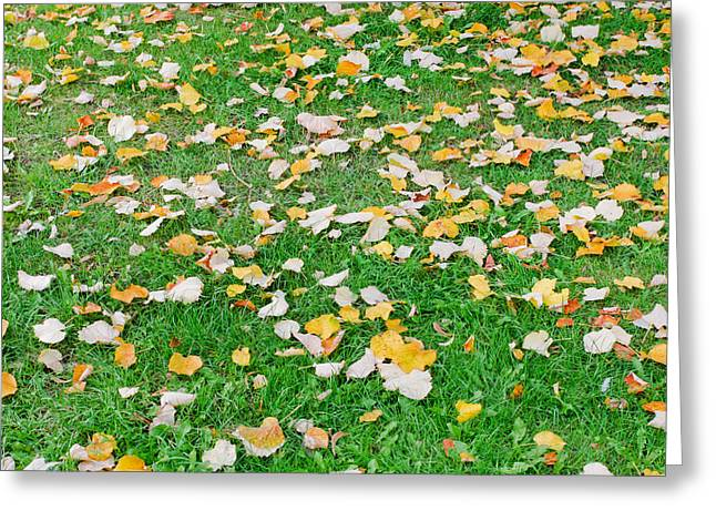 Annual Greeting Cards - Autumn leaves Greeting Card by Tom Gowanlock