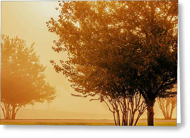 Jogging Greeting Cards - Autumn Morning in the Park Greeting Card by Mountain Dreams