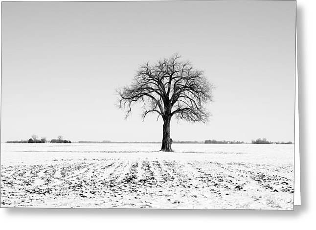 Bare Trees Greeting Cards - Bare Cottonwood Tree in Winter Greeting Card by Donald  Erickson