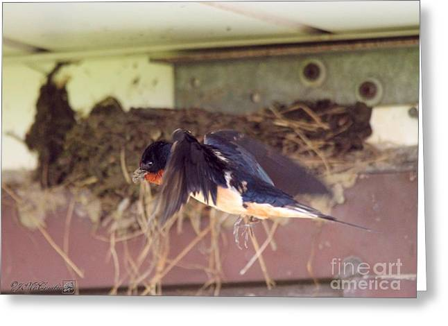 Barn Swallows Constructing Their Nest Greeting Card by J McCombie
