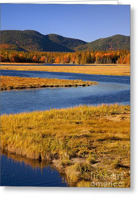 Mt Desert Island Greeting Cards - Bass Harbor Marsh Greeting Card by Brian Jannsen