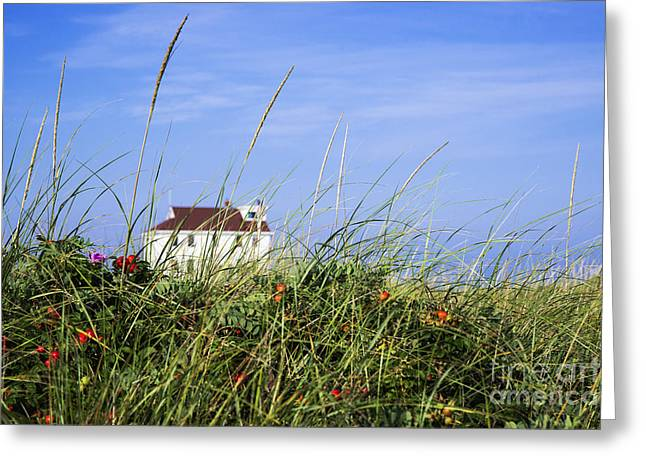 Beach Roses Greeting Cards - Beach House Greeting Card by John Greim