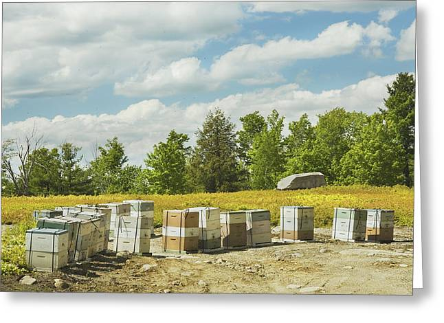 Beeswax Greeting Cards - Beehives In A Maine Blueberry Field Greeting Card by Keith Webber Jr