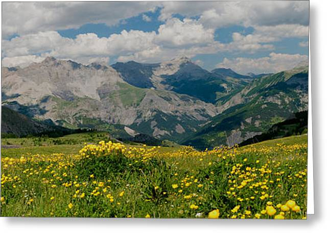 Champs Greeting Cards - Blooming Buttercup Flowers In A Field Greeting Card by Panoramic Images