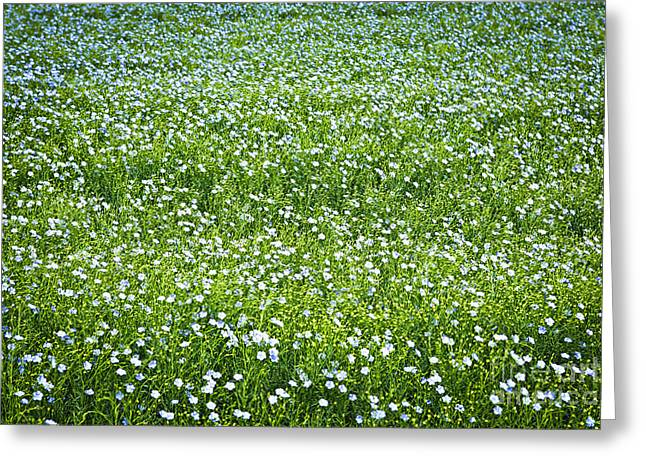 Flower Blooms Greeting Cards - Blooming flax field Greeting Card by Elena Elisseeva