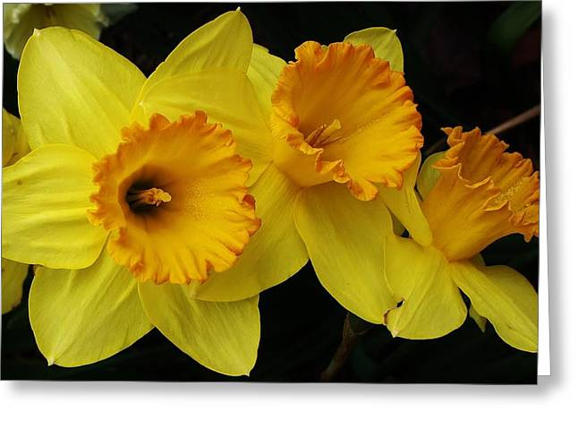 3 Blossoms In A Row Greeting Card by Bruce Bley