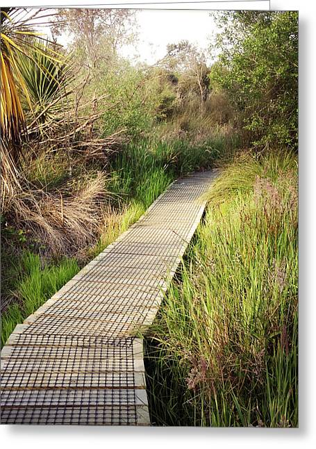 Swampland Greeting Cards - Boardwalk  Greeting Card by Les Cunliffe