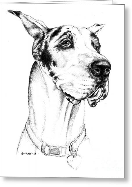 Great Dane Portrait Greeting Cards - Bodhi  Greeting Card by Catherine Garneau
