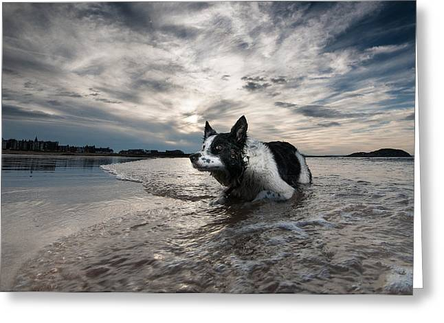 Patch Greeting Cards - Border Collie Greeting Card by Keith Thorburn LRPS