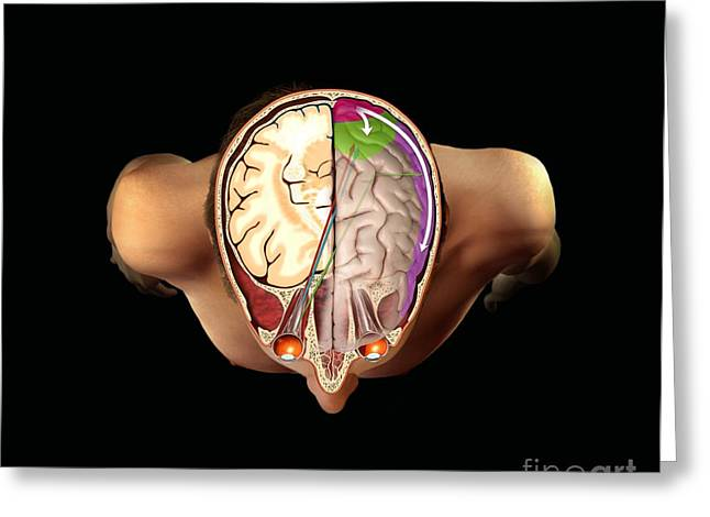 Hypothesis Greeting Cards - Brain And Vision, Artwork Greeting Card by Henning Dalhoff