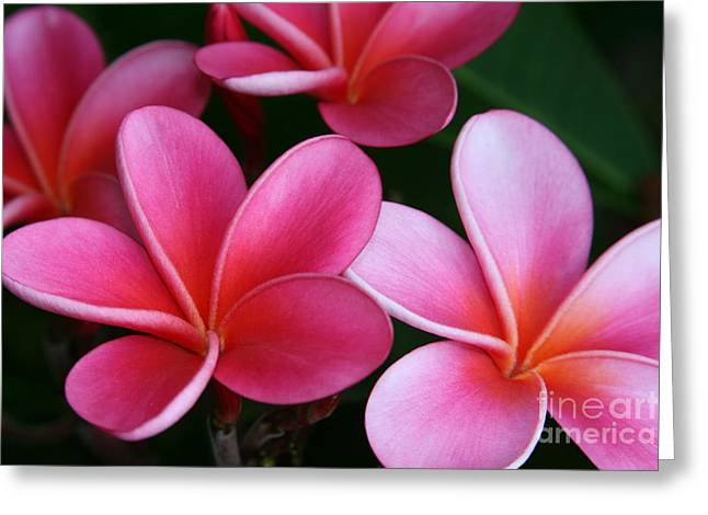 Lei Greeting Cards - Breathe Gently Greeting Card by Sharon Mau