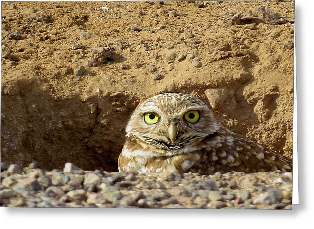 Wildlife Genre Greeting Cards - Burrowing Owl Greeting Card by Ed  Cheremet
