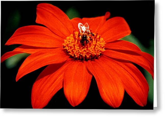 Vivid Greeting Cards - Busy Bee  Greeting Card by J D Owen