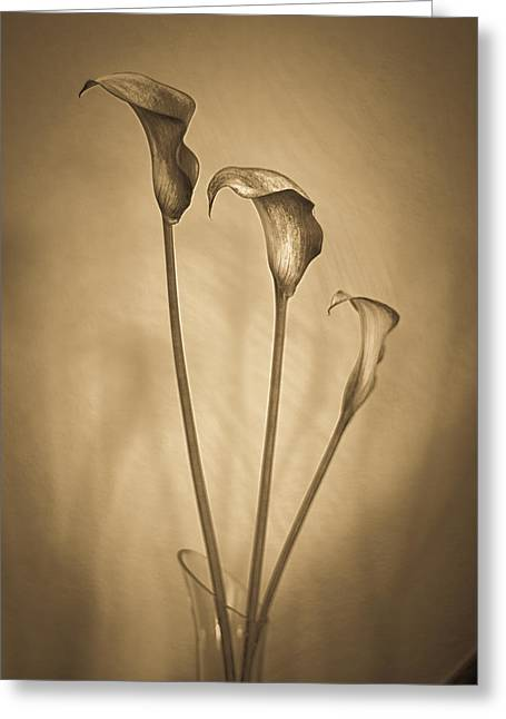 Artistic Photography Greeting Cards - 3 Calla Lilies Greeting Card by Constance Fein Harding