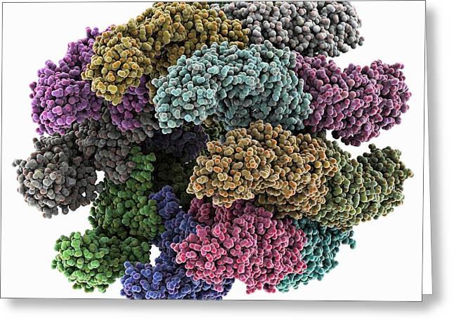 Atp Photographs Greeting Cards - Chaperonin Folding Protein Greeting Card by Laguna Design