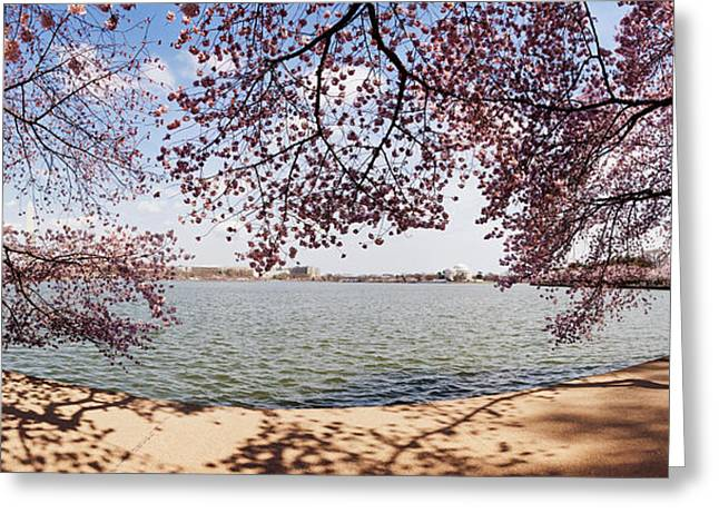 Flower Memorial Photography Greeting Cards - Cherry Blossom Trees In The Tidal Basin Greeting Card by Panoramic Images