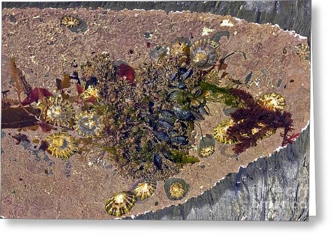 Rocks. Tidal Pool Greeting Cards - Coastal Rock Pool Greeting Card by Dr Keith Wheeler