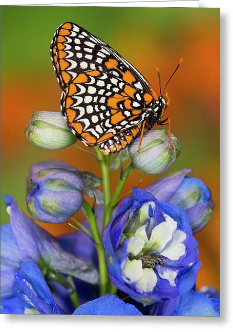 Colorful Baltimore Checkered Spot Greeting Card by Darrell Gulin