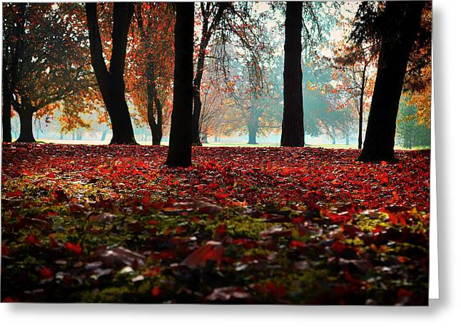 Ground Level Greeting Cards - Colors of Autumn Greeting Card by Mountain Dreams