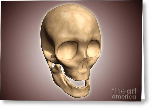 Conceptual Image Of Human Skull Greeting Card by Stocktrek Images