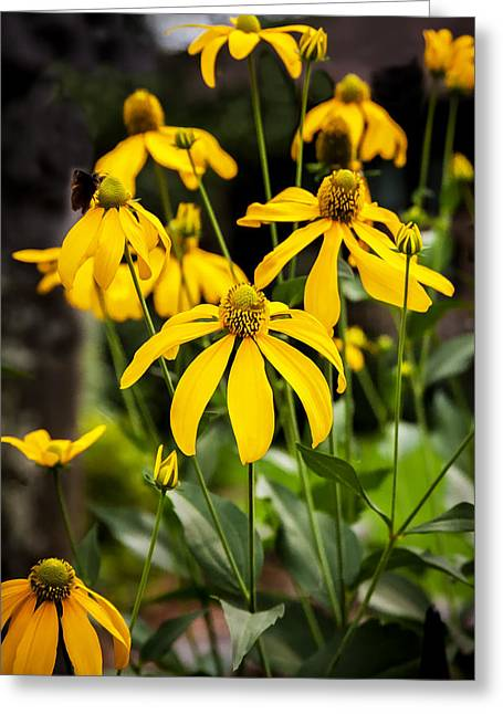 Abstracted Coneflowers Greeting Cards - Coneflowers Echinacea Yellow Painted Greeting Card by Rich Franco