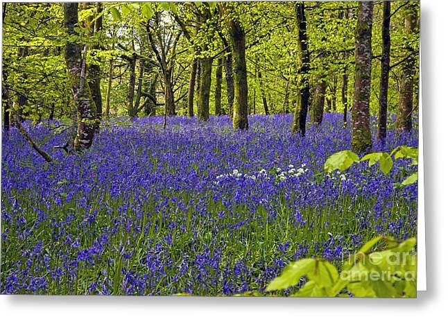 Spring Bulbs Greeting Cards - Cornwall Llanhydrock Gardens Greeting Card by Dr. Keith Wheeler