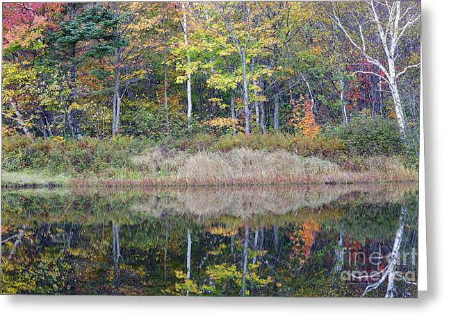 Fall River Scenes Greeting Cards - Crawford Notch State Park - White Mountains New Hampshire USA Greeting Card by Erin Paul Donovan