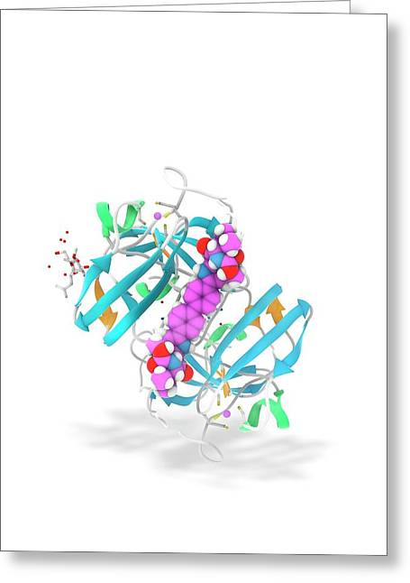 Daclatasvir And Ns5a Protein Complex Greeting Card by Ramon Andrade 3dciencia