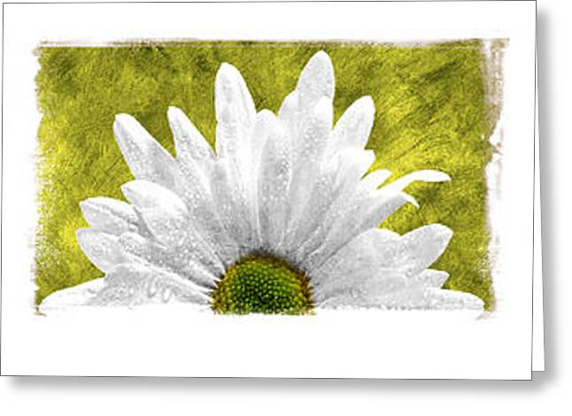 Abstract Digital Pyrography Greeting Cards - 3 Daisies  Greeting Card by Mauro Celotti