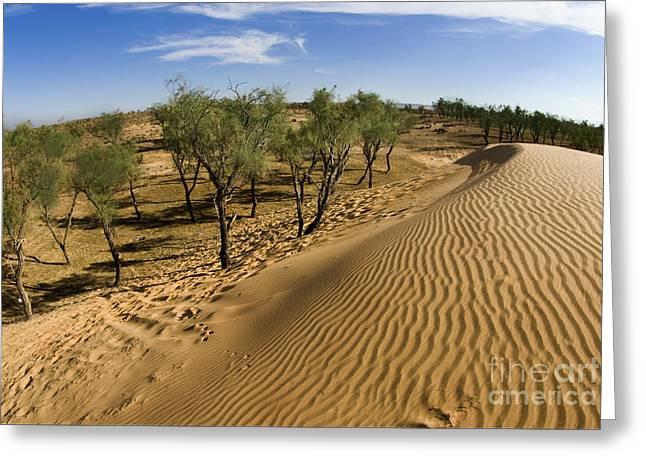 Recently Sold -  - Sanddunes Greeting Cards - Desert Tamarix trees Greeting Card by Dan Yeger