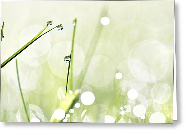 Green Blade Of Grass Greeting Cards - Dew In Grass Greeting Card by Jana Behr