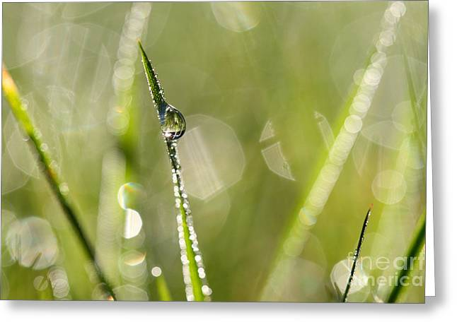 Green Blade Of Grass Greeting Cards - Dew Greeting Card by Jana Behr