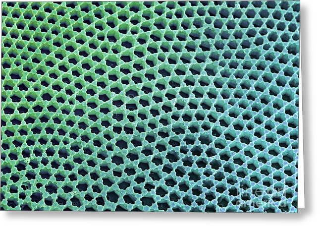 Striae Greeting Cards - Diatom Cell Wall, Sem Greeting Card by Steve Gschmeissner