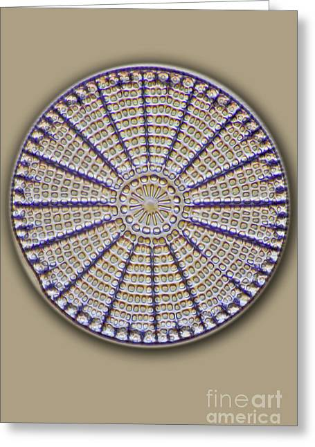 Diatoms Photographs Greeting Cards - Diatom, Lm Greeting Card by Frank Fox