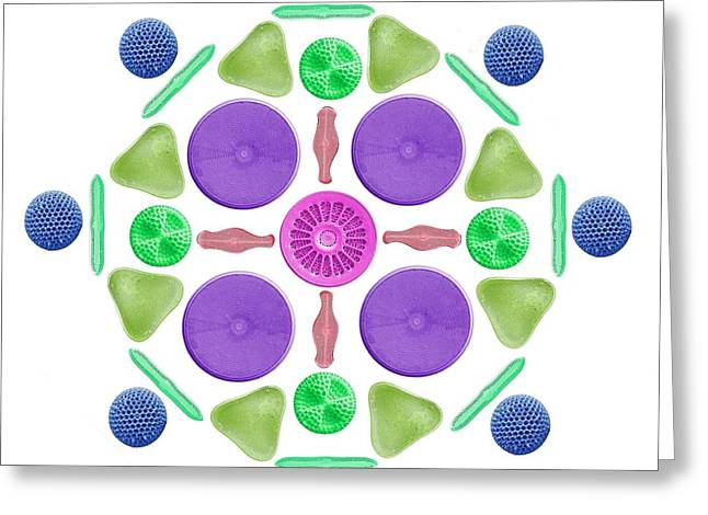 Diatoms And Radiolaria Greeting Card by Steve Gschmeissner