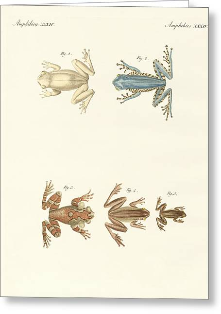 Veins Drawings Greeting Cards - Different kinds of foreign tree frogs Greeting Card by Splendid Art Prints