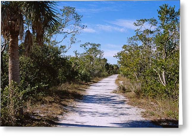 J N Ding Darling National Wildlife Refuge Greeting Cards - Dirt Road Passing Through A Forest Greeting Card by Panoramic Images